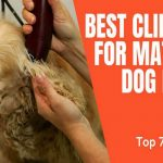Best Clipper for Matted Dog Hair