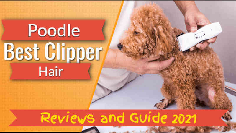 best clipper for poodle hair
